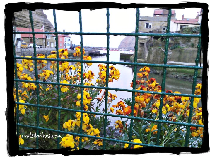 staithes-in-bloom-001