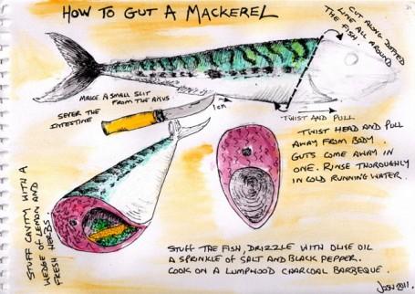 sean-way-gut-mackerel
