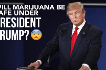 marijuna-president-trump