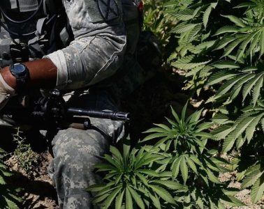 soldier and cannabis plant