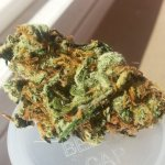 Super Lemon Haze Sativa