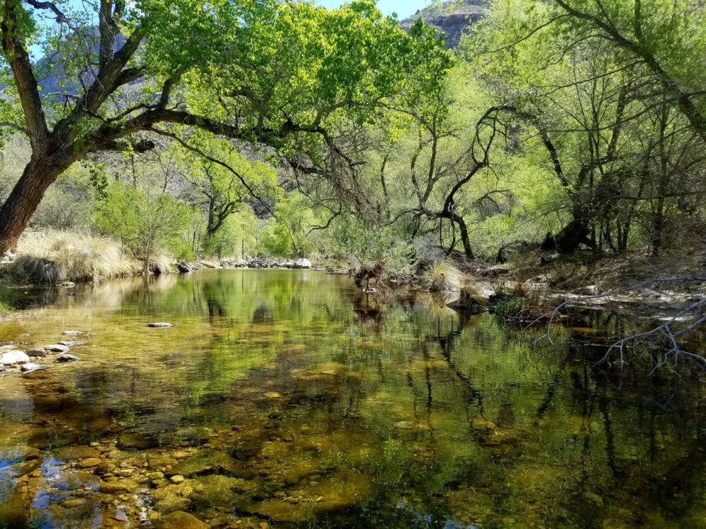 An oasis in the Sonoran Desert. Water flows much of the year in Sabino Canyon.