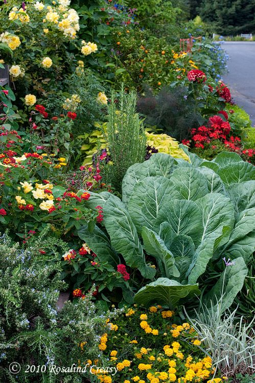 edible landscaping realtygoddess