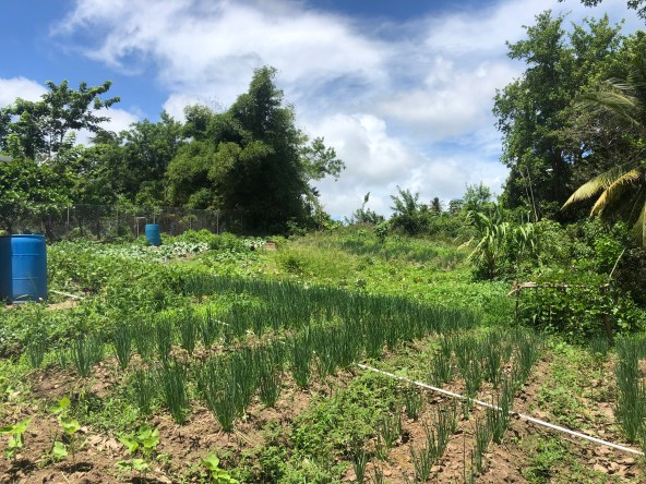 land for sale in augier