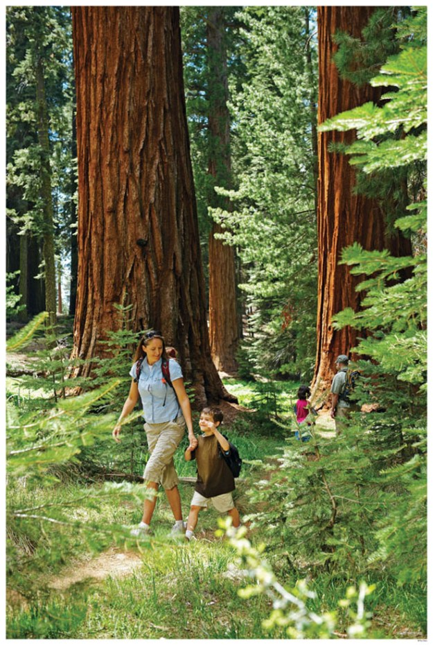 Hiking-Mom-and-Son-in-the-Mariposa-Grove-of-Giant-Sequoias