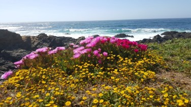 Seaside flowers. Photo courtesy of Kaine Gish.