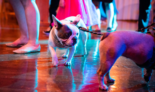 Sacramento Wedding Photographer | Lake Tahoe Wedding Photography | Northern California Wedding Photographer | Dogs at Weddings