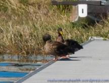 Ducky Pair