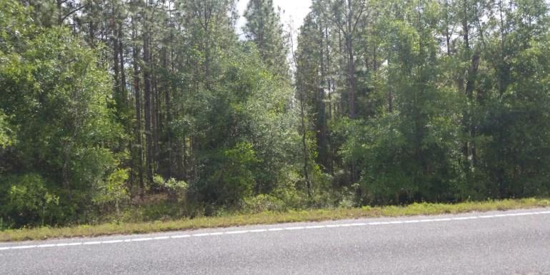 PTL pine rows on paved road (Medium)