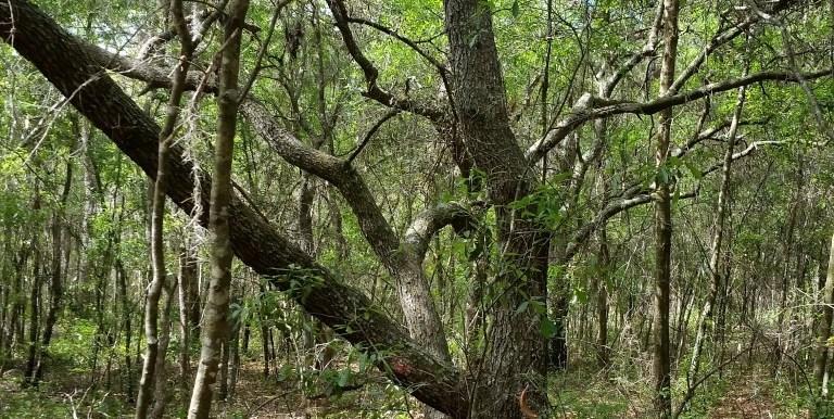ptl oak hammock (Medium)