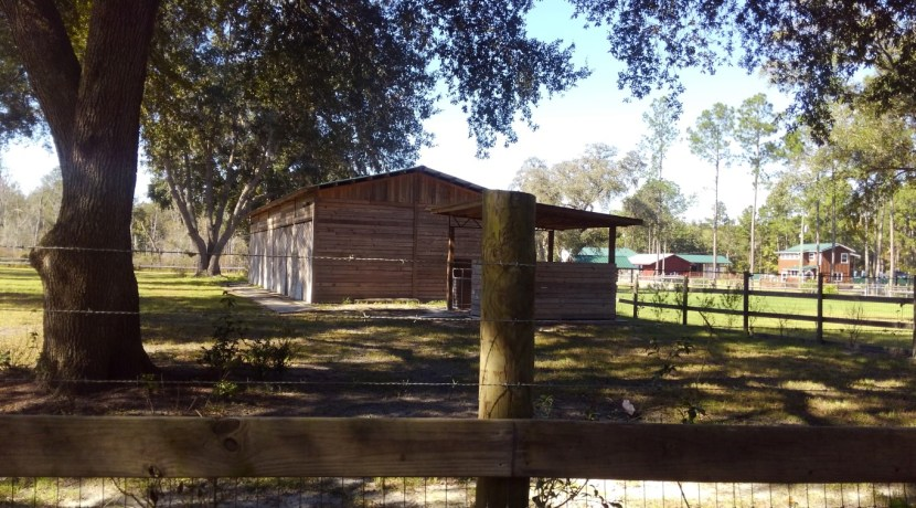 shaked bg barn (Medium)