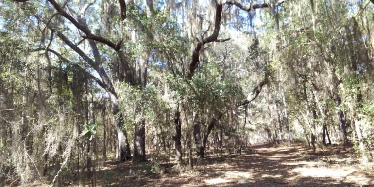 beahm 3.18 ac woods (Medium)