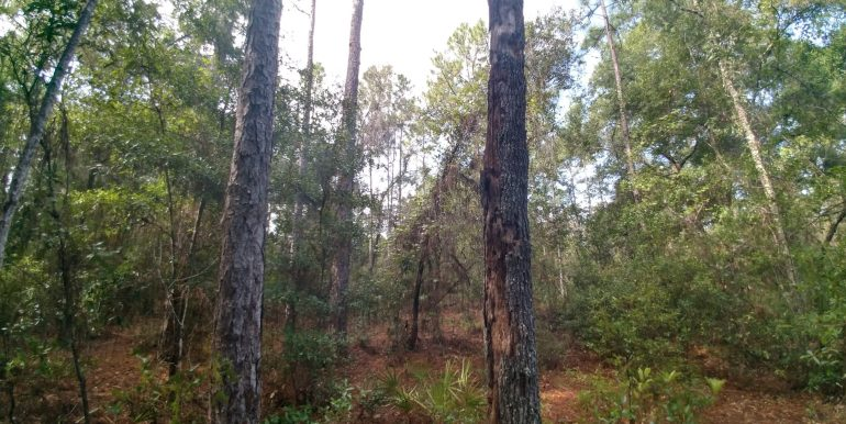 Edwards pines