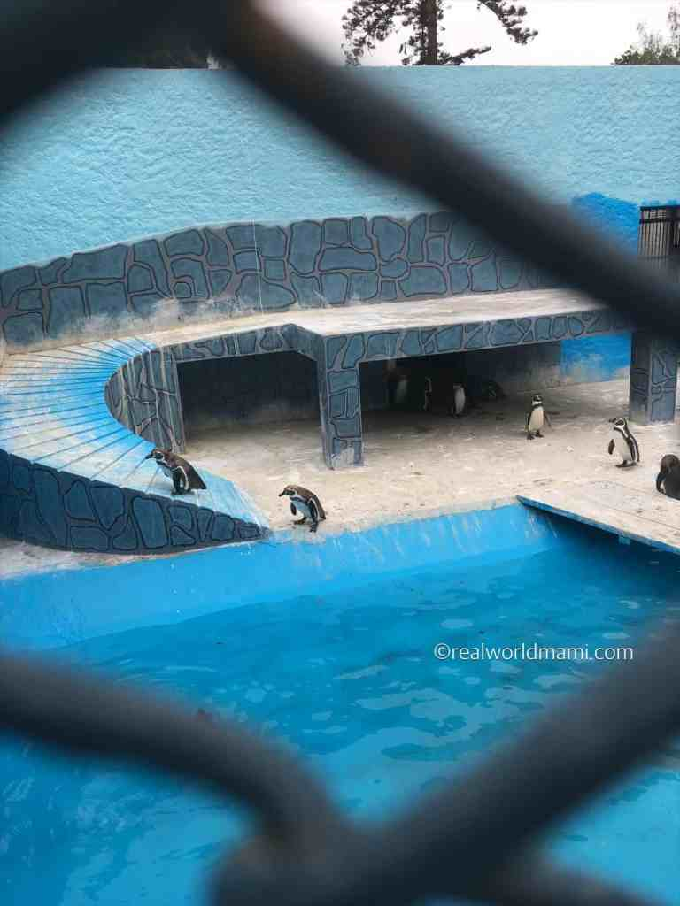 Visiting Peru with kids zoo