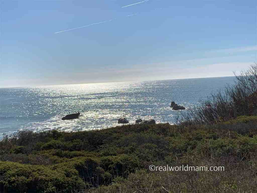 An example of the magical view during our hike to the main sight point at Ano Nuevo State Park