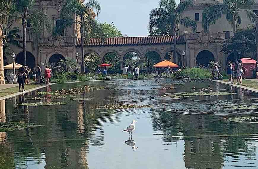 10 Most Memorable  Kid Things To do in San Diego