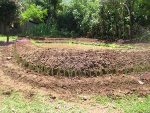 Using-Vetiver-grass-round-a-fish-pond 512x384