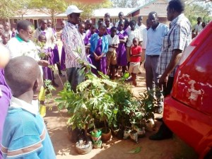 Photo of Unloading the trees at Kaminogedo Primary School from Newsletter April 2017