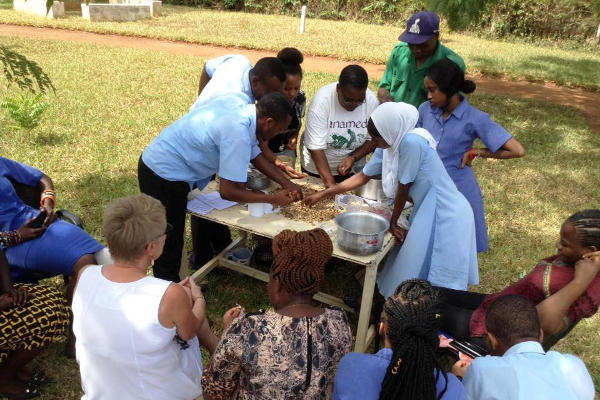 Students cleaning groundnut shells ready for making medicinal charcoal