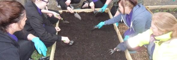 Second Grow Elgin blog