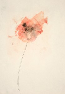 'pink flower series 1' mixed media on paper 40 x 30 cm unframed $255