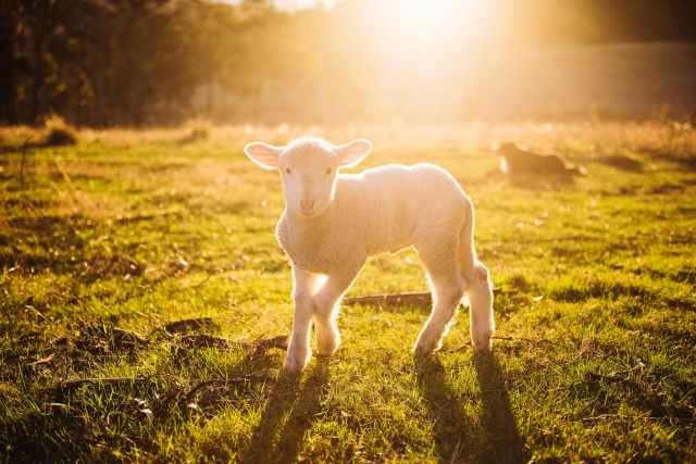 John 21: Feed My Sheep