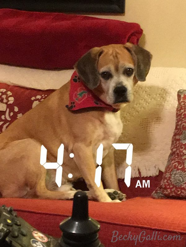 What My Puggle Taught Me This Week
