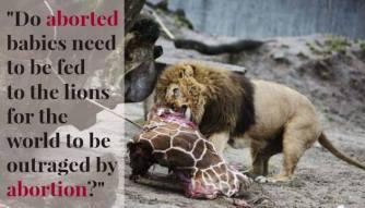 giraffe and lion