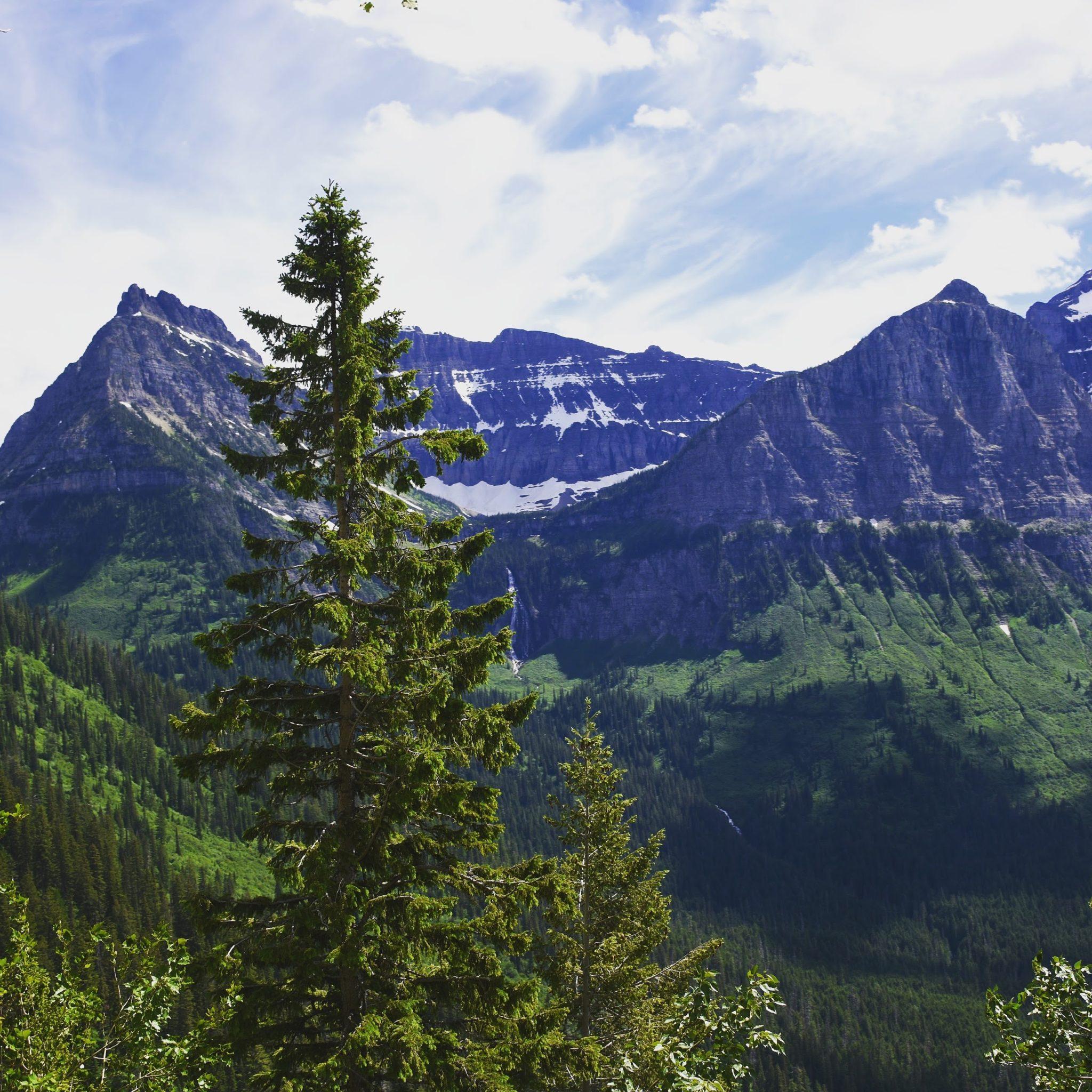 Montana Views