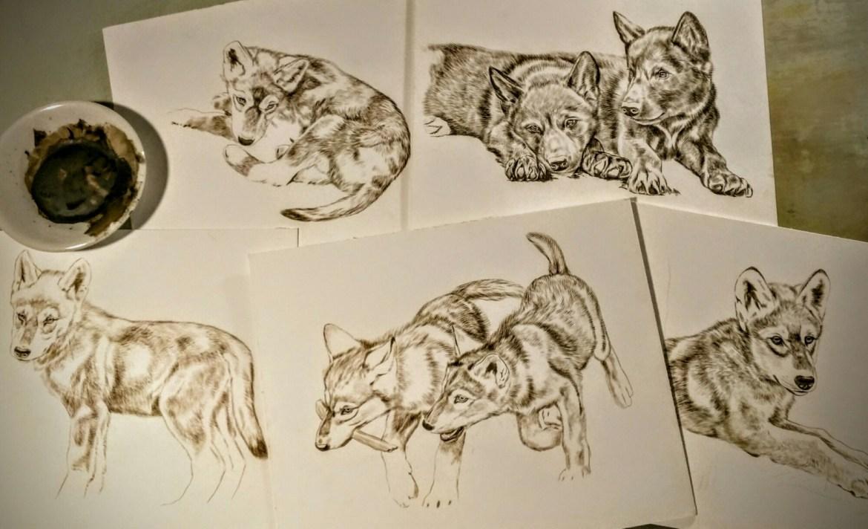 Wolf Puppies in sepia watercolor. ©Rebecca Latham