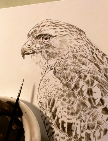 New Red Tail Hawk Painting, 8x10, Sepia Stage, Rebecca Latham