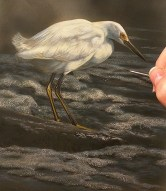 Snowy Egret - New Watercolor Painting by Rebecca Latham