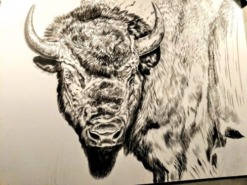 Bull Bison Portrait (Presently Untitled) in progress, 20x24in, watercolor on board