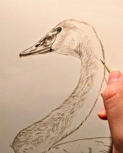 Detail, Trumpeter Swan Work in Progress Sepia Watercolor, Rebecca Latham