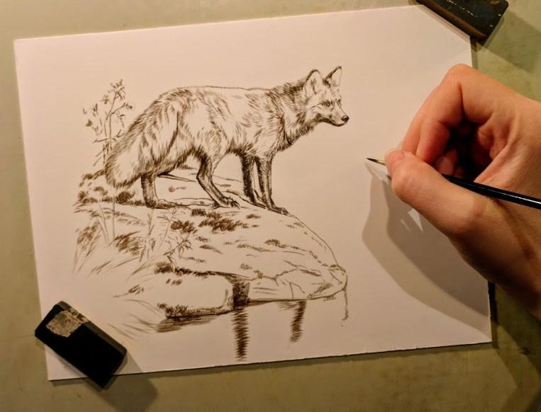 Red Fox, 6x8, Works in Progress, Sepai stage watercolor, Rebecca Latham