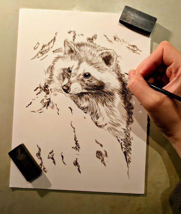 Raccoon, 6x8, Works in Progress, Sepai stage watercolor, Rebecca Latham