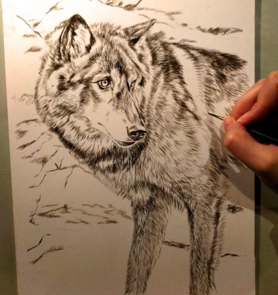 Black Wolf, 9x12, Work in Progress Sepia Watercolor, Rebecca Latham