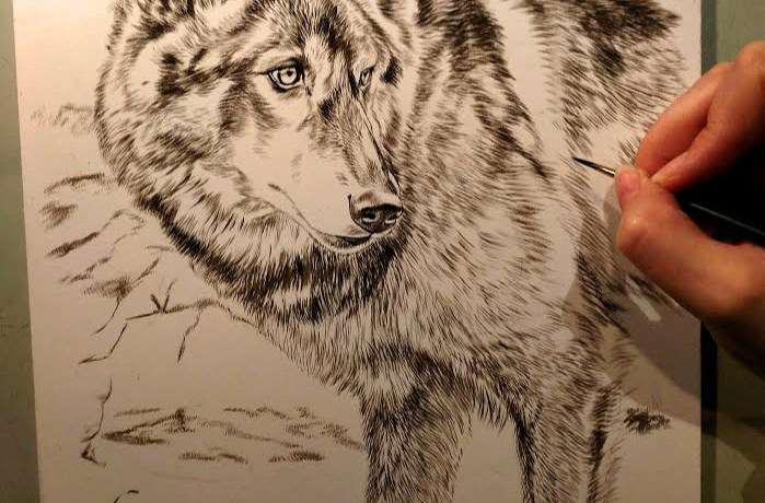 Black Wolf, 9x12, Work in Progress Sepia Watercolor, Rebecca Latham