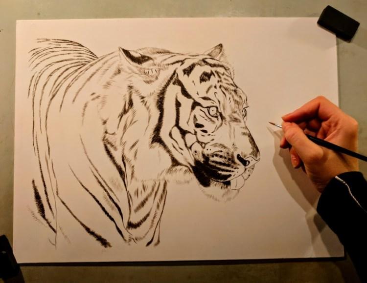 Tiger, Work in Progress Sepia Watercolor, Rebecca Latham
