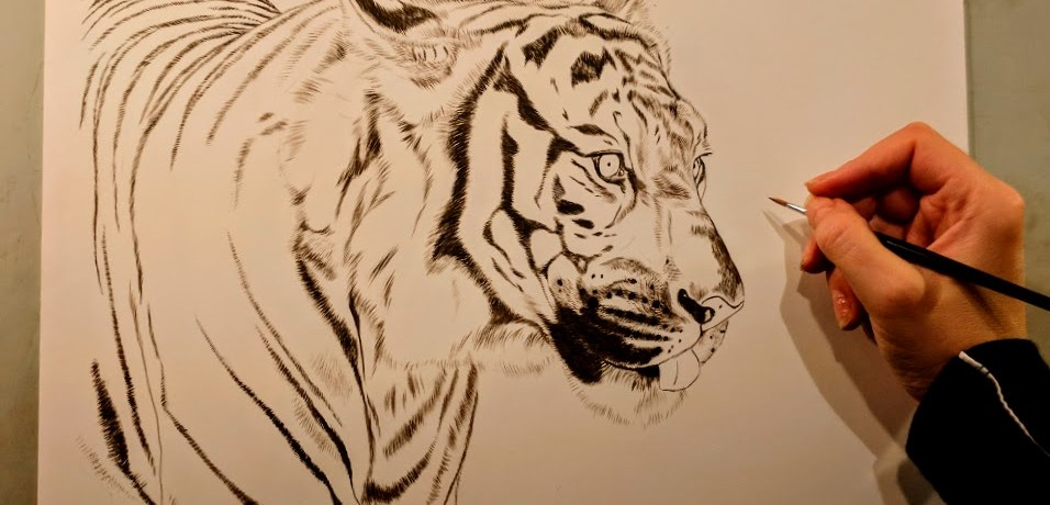 Tiger, Work in Progress Sepia Watercolor, Rebecca Latham