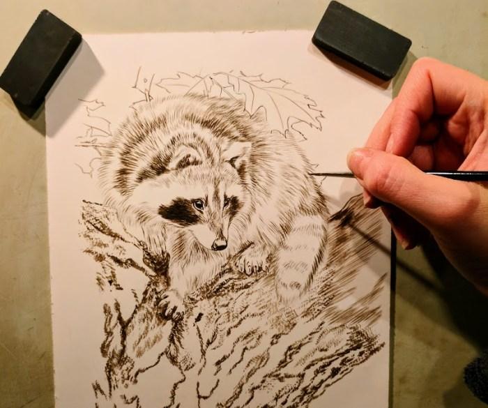 "Raccoon, Work in Progress, Sepia Watercolor, 6""x8"", Rebecca Latham"