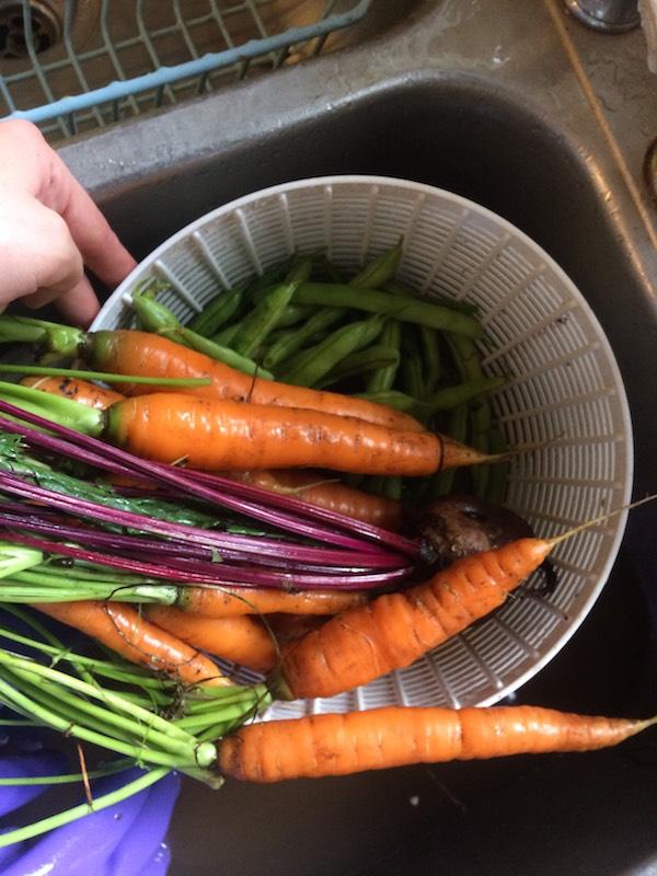 CarrotsAug17
