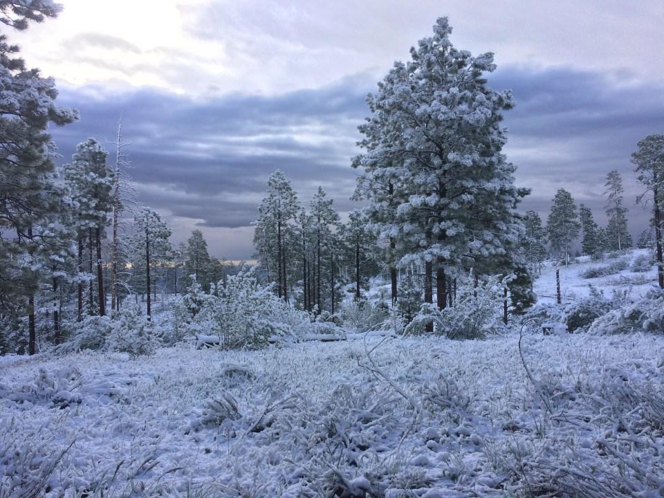 azt-snow