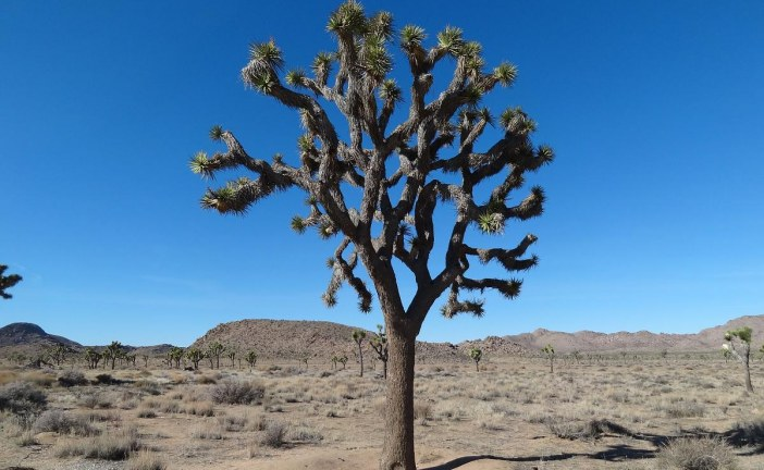 Daytripping in Joshua Tree National Park