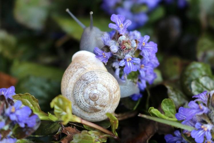 bob-the-snail