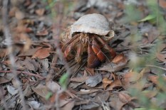 This guy was enormous, about the size of my fist