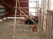 I loved the chicken coop!