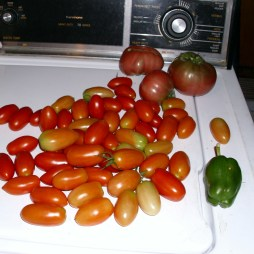 First big harvest, part one!