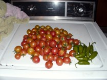 First big harvest, part two!