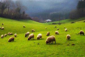 Entretien avec Nicolas Fabre – Le retour à la terre : mythe ou réalité ?